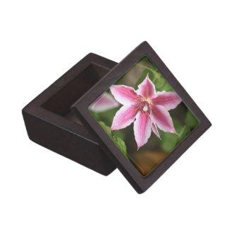 Clematis Premium Gift Box
