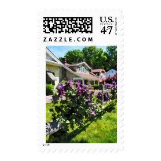 Clematis púrpura en la cerca rústica timbres postales