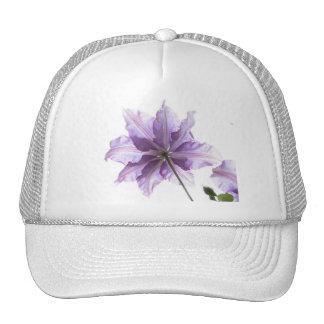 Clematis púrpura hermoso gorros
