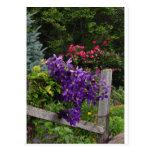 Clematis púrpura que sube tarjeta postal