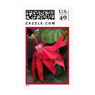 Clematis rojo franqueo