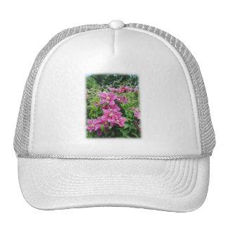 Clematis. Rosa bonito - flores púrpuras Gorra