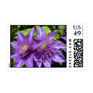 Clematis Sellos