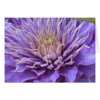 Clematis Vyvvyan Pennell Card
