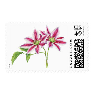 Clematis watercolor stamp