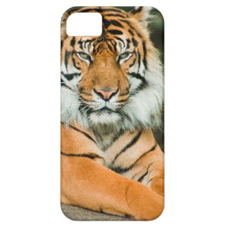 Clemson Tiger Football Cell Phone Cases and Covers