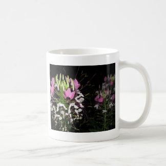 cleome 1 taza