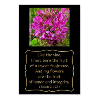 Cleome Flower with Bible Verse from Sirach 24: 23 Poster