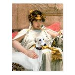 Cleopatra y Whippet blanco Tarjeta Postal