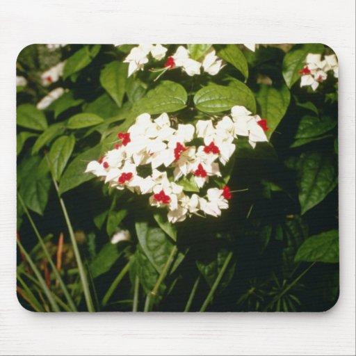 Clerodendron Thompsonae Variegatum (Glory B Mouse Pad