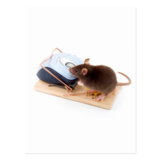 Clever Mouse Postcard