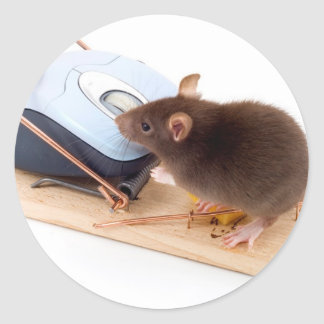 Clever Mouse Sticker