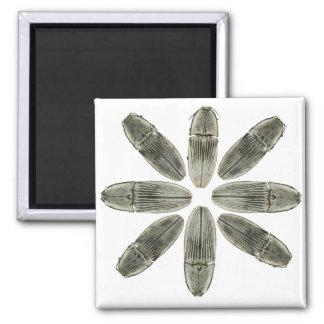 Click beetle magnet