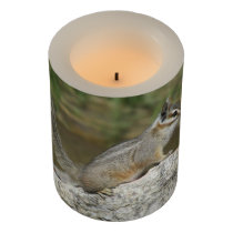 Cliff Chipmunk Flameless Candle