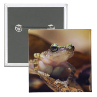 Cliff Chirping Frog, Eleutherodactylus 2 Inch Square Button