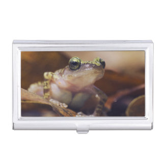 Cliff Chirping Frog, Eleutherodactylus Case For Business Cards