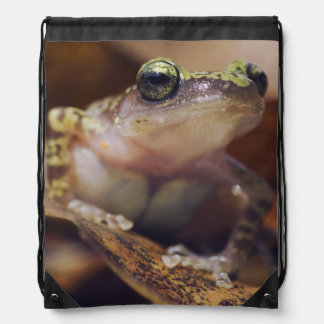 Cliff Chirping Frog, Eleutherodactylus Cinch Bags