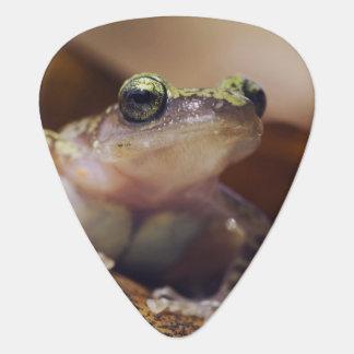 Cliff Chirping Frog, Eleutherodactylus Guitar Pick