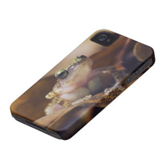 Cliff Chirping Frog, Eleutherodactylus iPhone 4 Case-Mate Cases