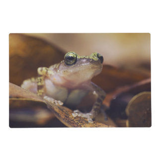 Cliff Chirping Frog, Eleutherodactylus Laminated Placemat