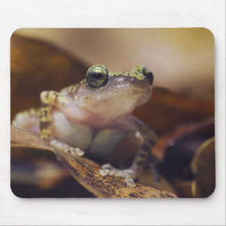 Cliff Chirping Frog, Eleutherodactylus Mouse Pad