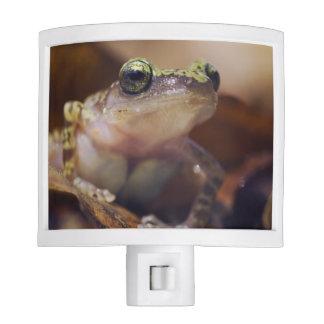 Cliff Chirping Frog, Eleutherodactylus Night Lights
