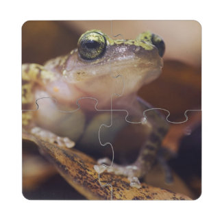 Cliff Chirping Frog, Eleutherodactylus Puzzle Coaster