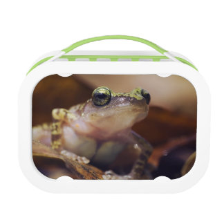 Cliff Chirping Frog, Eleutherodactylus Replacement Plate