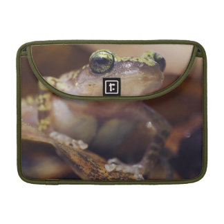 Cliff Chirping Frog, Eleutherodactylus Sleeve For MacBook Pro