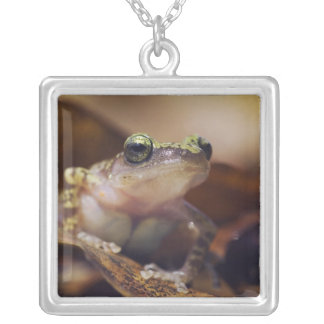Cliff Chirping Frog, Eleutherodactylus Square Pendant Necklace