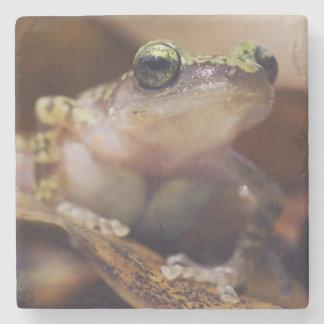 Cliff Chirping Frog, Eleutherodactylus Stone Coaster