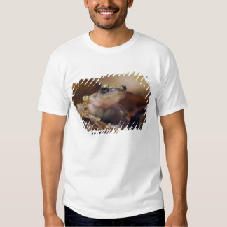 Cliff Chirping Frog, Eleutherodactylus T-shirt