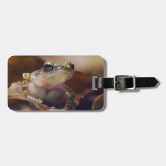Cliff Chirping Frog, Eleutherodactylus Travel Bag Tags