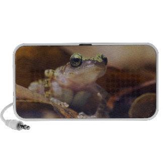Cliff Chirping Frog, Eleutherodactylus Travel Speakers