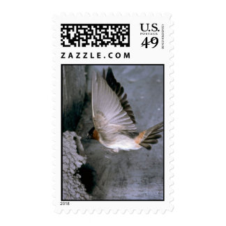 Cliff Swallow approaching nest Postage