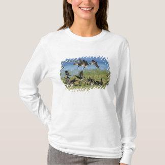 Cliff Swallow, Hirundo pyrrhoa, Mixed flock T-Shirt