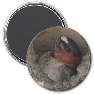 Cliff Swallow Magnet
