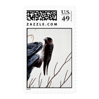 Cliff swallow stamp