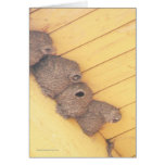 Clift Swallow Nests Greeting Card