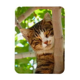 Climber cat rectangular photo magnet