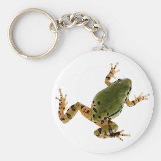 Climbing Arizona Tree Frog Photograph Keychain