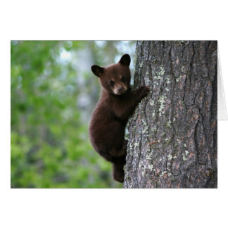 Climbing Bear Cub Card