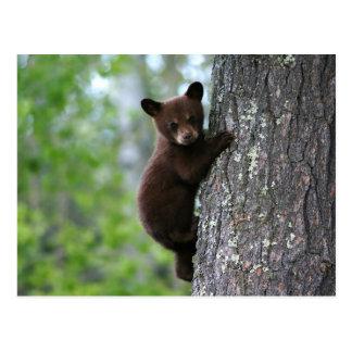 Climbing Bear Cub Postcard