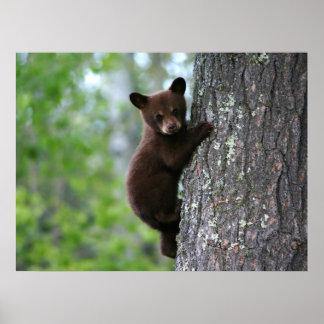 Climbing Bear Cub Poster