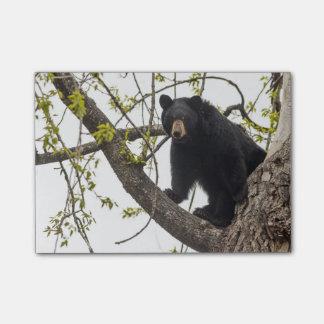 Climbing Black Bear Post-it Notes