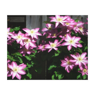 Climbing Clematis Purple and White Flowers Canvas Print