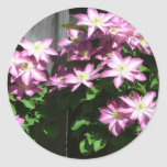 Climbing Clematis Spring Flowers Classic Round Sticker