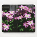 Climbing Clematis Spring Flowers Mouse Pad