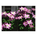 Climbing Clematis Spring Flowers Photo Print