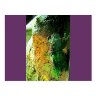 Climbing Frog CB Postcard